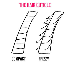 hair cuticle